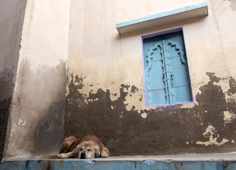 Hund fasadrenovering